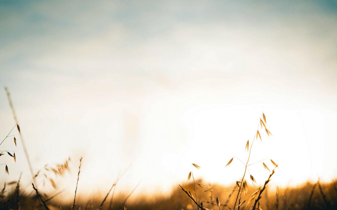 Natural Fertility and Preconception Care